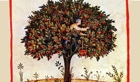 La torta di ciliegie del Plàtina (1480)